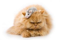 Кошки: какая порода именно Ваша?